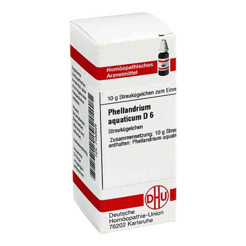 Phellandrium Aquaticum D 6 Globuli  bei Apotheke.de bestellen