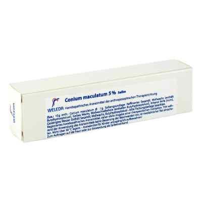 Conium Maculatum 5% Salbe  bei Apotheke.de bestellen