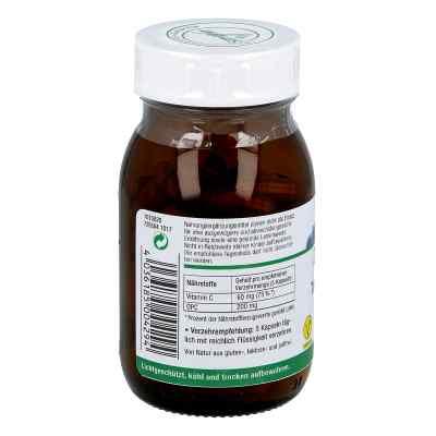 Opc Traubenkern & Vitamine C Kapseln  bei Apotheke.de bestellen