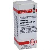 Theridion Curassavicum C 30 Globuli  bei Apotheke.de bestellen