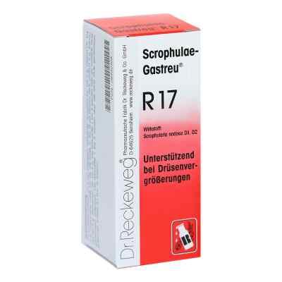 Scrophulae Gastreu R 17 Tropfen zum Einnehmen  bei Apotheke.de bestellen