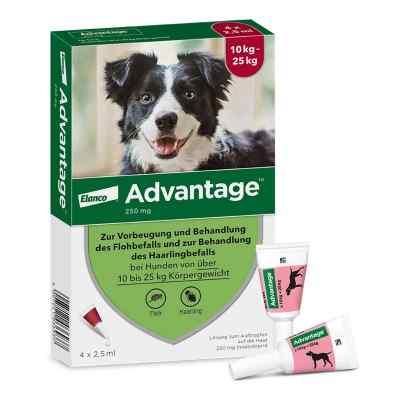 Advantage 250 für Hunde Lösung