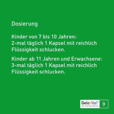 Gelovital Nahrungsergänzungsmittel Kapseln  bei Apotheke.de bestellen
