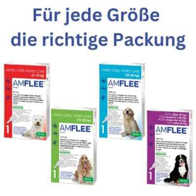 Amflee 268 mg Lösung zur, zum Auftropfen für grosse Hunde  bei Apotheke.de bestellen